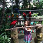 very close encounters with the parrots... who recognize my daughter by name at this point