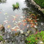 Garden pool with fish and turtles