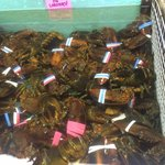 Lobsters in tanks below the restaurant. You can come in a buy ones to take home as well