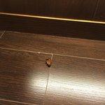Increíble e inadmisible encontrar en un hotel d esta categoría un día hormigas en el mueble bar