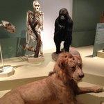 Musée histoire naturelle de Lille