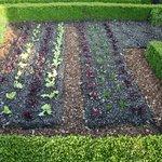 Garden used for kitchen supplies