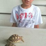 my son Trae admiring the beautiful baby turtles.
