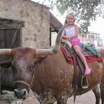 Sitting astride the longhorn