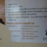 Oproep om locatie zeldzame dieren (Wilde hond, of  de Bromvoël (Hoornraaf) door te geven (maart