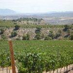 Nuestros viñedos al pie de Sierra Nevada