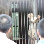 The monkey-feeding area
