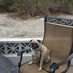 Pug approval