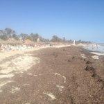 La plage pas nettoyé 1 semaine!