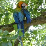 'tame'parrot flew into a nearby tree- great shot