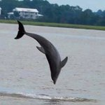 So rare to get a good picture of a dolphin. But to get one jumping is great.
