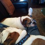 B&B pups
