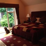Huge room and dog friendly too!