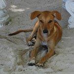 Beach doggie - likes chicken scraps and fresh water!