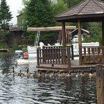 Ducks swimming around the Pagoda