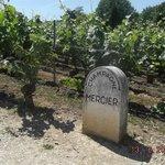 mercier vines in Epernay