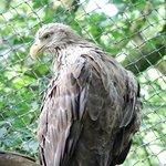 Kind of Eagle