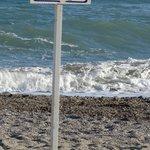 Protection des tortues Caretta