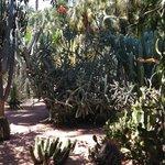 Сад Мажореля