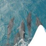 Golfinhos na Ilha do Meio