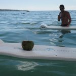 floating coconuts