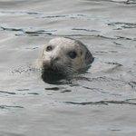 Friendly neighborhood Seal