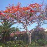 Beautiful tree on property