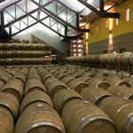 Justin Wine Cellar
