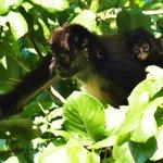 Monkeys in nature