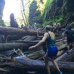Climbing the log jam