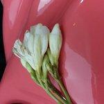 La fleur du départ