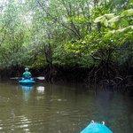 Through the Mangrove with Khirien