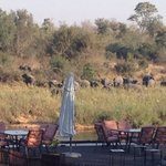 The elephants that came to the lodge