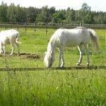 ânes et poneys