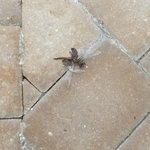 Dead bugs everywhere, pool area never swept or cleaned