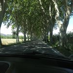 a typical drive in this area between rows of trees