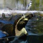 Dubai aquairum and underwater zoo