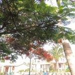 végétation hôtel