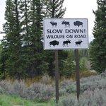 wildlife sign