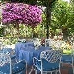 Il giardino e la Buganvillea