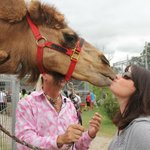 """Kissing"" the camel"