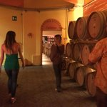 Inside Buonamico winery, touring the cellars