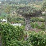 Tenerife Icod de los Vinos