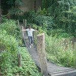 Bridge in the Zoo