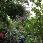 Stunning garden off the high street in Totnes