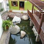 Turtle garden from 2nd floor