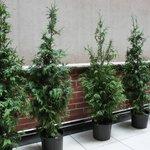 Plants Along the Patio