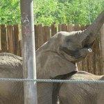 the elephants entertain every day.....