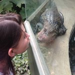 Face off with the friendly Caiman