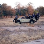 this wasn't our vehicle (but similar), and shows how close you get to the animals.